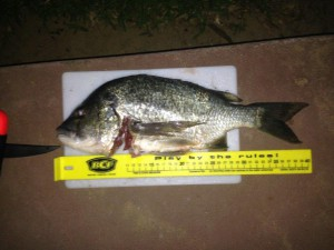 Bream - Nov 13