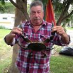 Lindsay's Crab